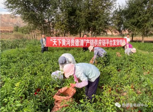 青海省贵德县探索互联网+农牧产业发展新模式